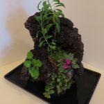 Plant list – tree-Gesneria salicifolia, violet – SK-First Love, trailing – Columnea 'Cascade Beauty, bush – Primulina maciejewski